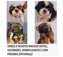 Título do anúncio: Shitzu Machos