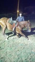 Cavalo lusitano Adestrado