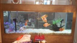Vendo lindo aquário montado ( Motivo Mudança )