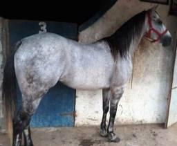 Investimentos para a sua fazenda ou criações de cavalos