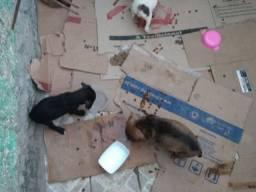 Cachorros abandonados! Para adotar.