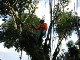 Título do anúncio: Poda e remoção de árvores