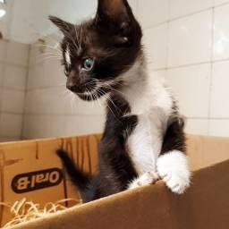 4 Gatinhos para adoção
