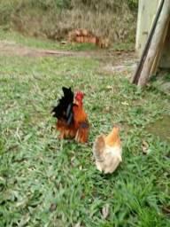 Vendo Aves