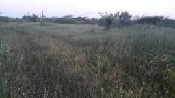 Fazenda com 190 Hectares em Serrinha beira do asfalto