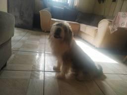 Cachorro doação (Katatau)