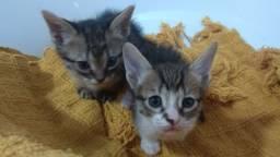 Título do anúncio: Doação de gatinhos