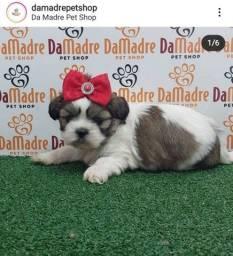 Título do anúncio: Lhasa apso Filhotes lindos - Da Madre Pet Shop!