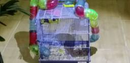 Casa de hamster e hamster