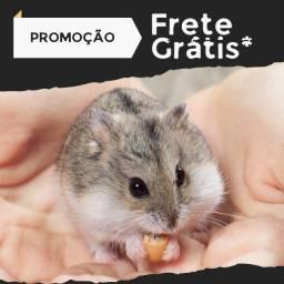 Título do anúncio: Hamster Frete Grátis, Filhotes Mansos e Saudáveis
