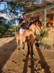 Título do anúncio: Vendo cavalo bom de montaria e laço