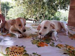 Doação cachorras