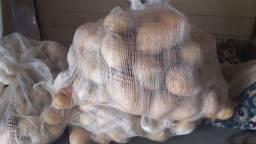 Batatas selecionadas