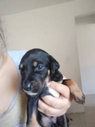 Título do anúncio: Doacao de Filhotes de Cachorro SRD