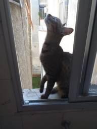 Doação de uma Gatinha