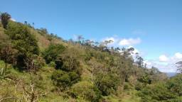 Roça. 23 hectares