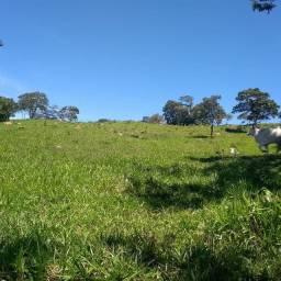 Fazenda a 45 km Minaçu divisa Tocantins
