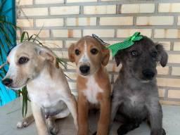 Cachorrinhos para doacao