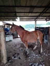 Título do anúncio: Cavalo manso demais pra criança e iniciantes