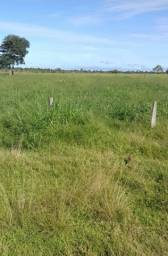 Fazenda em Rondônia /Oportunidade