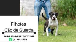 Filhotes Cão de Guarda