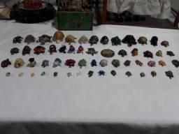 Coleção de Tartarugas