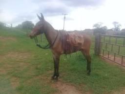 Venda de burro zap 997651051