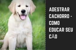 Adestrar Cachorro - Como Educar Seu Cão