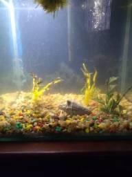 Lindo aquário completo para usar!