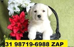 Canil Filhotes Cães Excelentes BH Labrador Akita Dálmatas Rottweiler Golden Pastor