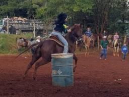 Cavalo Pronto No Laço e no Tambor
