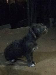 Cadela fêmea