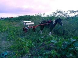 Título do anúncio: Cavalo com ar charrete pra vender