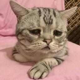 Doa-se: Um Gatinho Muito Triste e Solitário