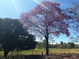 Fazenda 57 hectares saída Pirapora