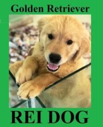 Golden Retriever de excelente linhagem - REI DOG