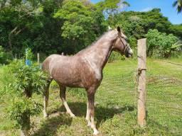 Potro (Cavalo) QM