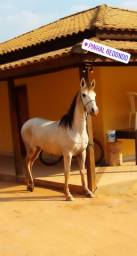 Cavalo , registro provisório