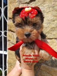 Título do anúncio: Filhotes de excelentes linhagens Yorkshire Terrier