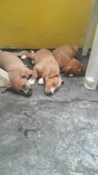 3 Lindos cachorros para doaç?o