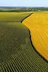 Título do anúncio: (Cm) Venha investir e expandir suas terras...