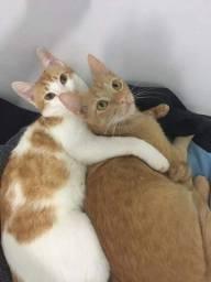Título do anúncio: Doação de gato