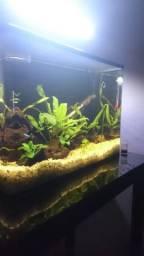 Kit aquario curvo