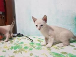 Doação de gatinhos lindos