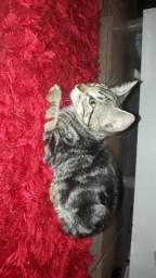 Doa gatinhos lindos e carinhosos 994015345 zap