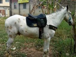 Cavalo pra vender ou troca