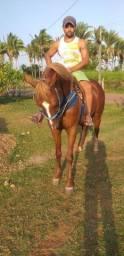 Título do anúncio: Um cavalo de 5 anos a venda só chamar no zap *