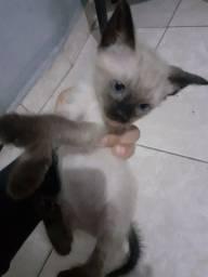 Título do anúncio: Doação de uma gatinha (femea)