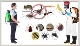 Título do anúncio: Baratas, Formigas ?