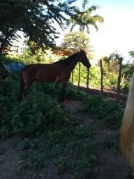 Título do anúncio: Cavalo manga larga machador